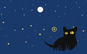 Картинка кот, ночь, котик