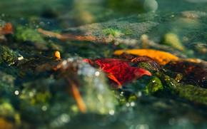 Картинка осень, листья, вода, свет, оранжевый, желтый, красный, природа, блики, пузыри, ручей, камни, настроение, течение, листочки, …