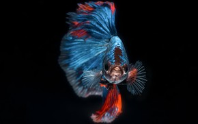 Картинка природа, фон, рыбка