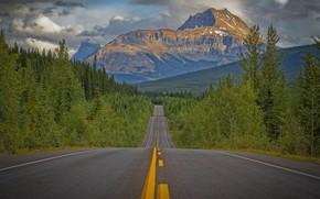 Картинка дорога, лес, деревья, горы, Канада, Canada, Скалистые горы, Rocky Mountains, Icefields Parkway