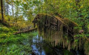 Картинка лес, озеро, мох