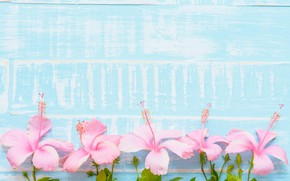 Картинка цветы, фон, розовый, голубой, wood, blue, pink, flowers