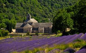 Картинка Франция, лаванда, плантация, Прованс, аббатство Сенанк