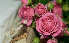 Картинка цветы, розы, букет, розовые
