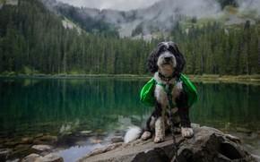 Картинка лес, горы, собака, водоем, накидка