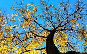 Картинка осень, небо, рендеринг, дерево, ветви, листва