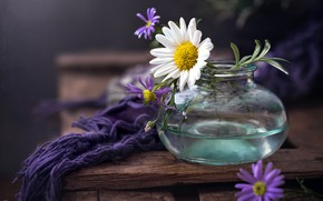 Картинка цветы, фон, банка