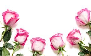 Картинка цветы, розы, композиция