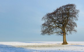 Картинка sky, Tree, field, nature, winter, snow