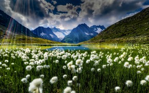 Картинка горы, озеро, Швейцария, луг, Switzerland, Bernese Alps, Бернские Альпы, пушица, Lake Märjelen, Озеро Мерйелен