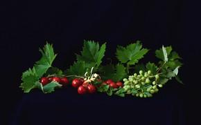 Картинка листья, виноград, помидоры