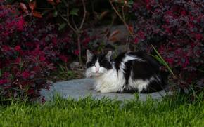 Картинка кошка, лето, трава, кот, взгляд, морда, листья, ветки, темный фон, фон, черно-белый, поляна, сад, кусты, …