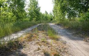 Картинка дорога, деревья, природа, зеленый, красиво