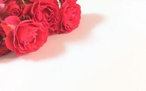 Картинка цветы, букет, Розы
