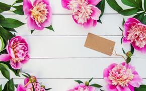 Картинка цветы, букет, розовые, wood, pink, flowers, beautiful, пионы, peonies