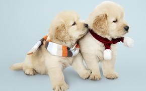 Картинка собака, Новый Год, Рождество, щенок, лабрадор, Christmas, puppy, dog, New Year, cute, Merry