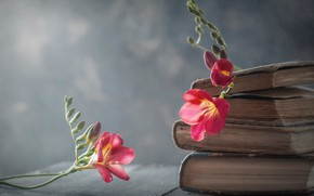 Картинка цветы, стиль, фон, книги, фрезия