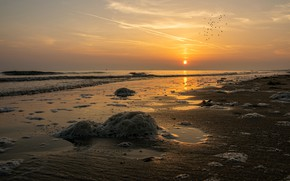 Картинка море, волны, пляж, небо, пена, закат, птицы, берег, побережье, стая, вечер, прибой, стая птиц, солгце