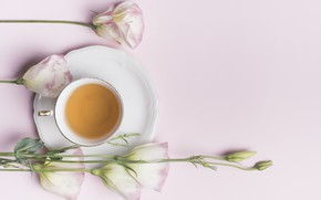 Картинка цветы, flowers, beautiful, cup, эустома, eustoma