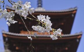 Картинка крыша, небо, цветы, япония, ветка, сакура
