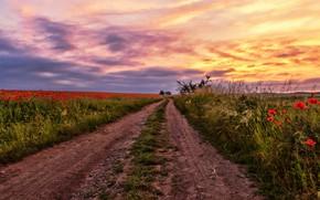 Обои дорога, поле, лето