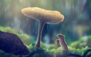 Картинка природа, дождь, гриб, жолудь, полевка