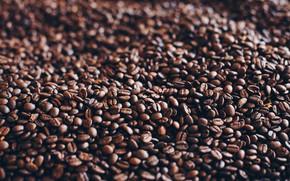 Картинка Зерна, Кофе, Куча, Много, Кофейные зерна, Coffee, Крупный план, Grain, Grains, Roasted, Pile, Зерно, Close-Up, …