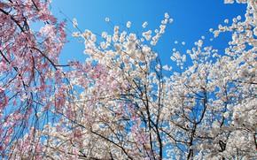Картинка цветки, деревья, цветение, солнце, небо, ветки, весна
