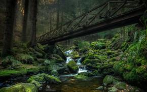 Картинка зелень, лес, деревья, мост, ручей, камни, мох, Germany, Ravennaschlucht
