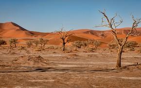 Картинка песок, деревья, ветки, холмы, растительность, пустыня, жара, дюны, сухие, Африка, Намибия, пески, кустарники, коряги, плато …
