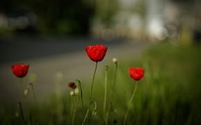 Картинка дорога, лето, трава, цветы, поляна, мак, маки, красные, боке, размытый фон