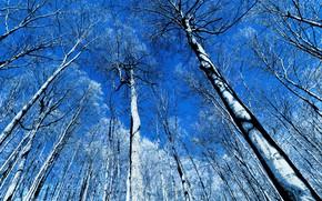 Картинка небо, деревья, природа