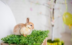 Картинка кролик, травка, цыпленок