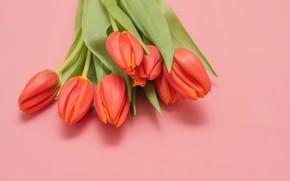 Картинка букет, весна, тюльпаны