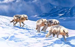 Картинка зима, поле, свет, снег, горы, следы, природа, рисунок, вершины, волк, стая, картина, арт, сугробы, волки, …