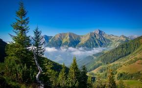 Картинка лес, небо, деревья, пейзаж, природа, туман, красота
