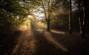 Картинка Осень, Лес, Утро, Лучи