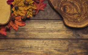 Картинка осень, листья, фон, дерево, colorful, доска, wood, желуди, background, autumn, leaves, осенние, maple