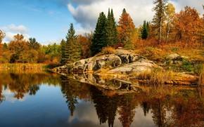 Картинка осень, лес, деревья, пейзаж, природа, озеро, красота