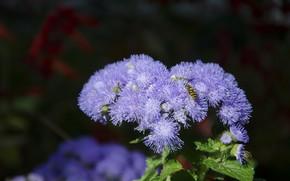 Картинка цветок, фиолетовый, макро, голубой