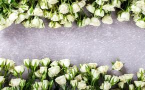 Картинка бутоны, белые розы, много