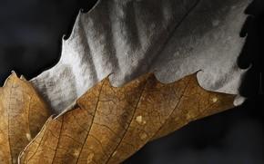 Картинка макро, лист, фон