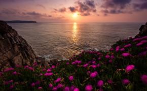 Картинка море, солнце, облака, свет, пейзаж, закат, цветы, природа, скала, камни, берег, побережье, яркие, вечер, горизонт, …