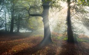 Картинка осень, лес, листья, солнце, лучи, свет, деревья, ветки, природа, туман, поляна, утро