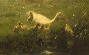 Картинка птицы, масло, картина, холст, 1910, Виллем Марис, Willem Maris, Белая утка с птенцами