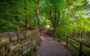 Картинка дорога, лес, пейзаж, природа, красота, перилла