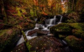 Картинка осень, лес, деревья, камни, Франция, водопад, мох, каскад