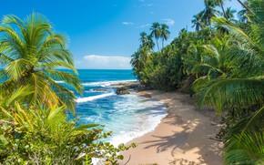 Картинка море, пальмы, Карибы, Коста-Рика