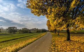 Картинка дорога, поле, листья, облака, деревья, пейзаж, ветки, природа, парк, путь, дерево, стволы, перспектива, листва, даль, …