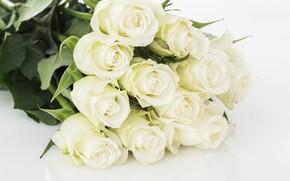 Картинка розы, букет, нежные, белые